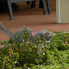 Sansei sees a bee in the garden