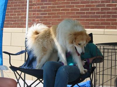 Petsmart Adoption May 2005