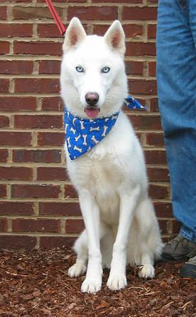 Petsmart Adoption Nov 2005