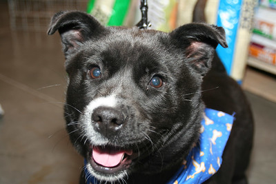 Petsmart adoption March 2006