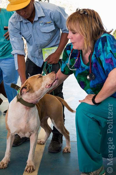 Veterinarian examines dog