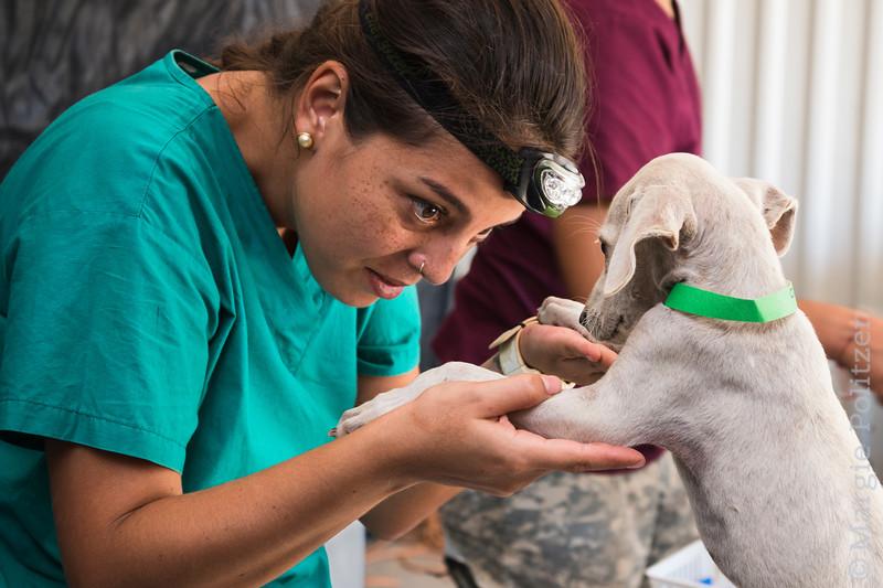 Veterinary student examines puppy