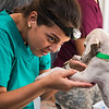 Veterinary student examines puppy