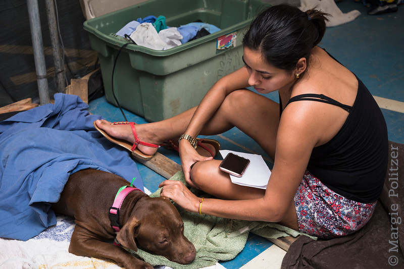 Young woman comforts her dog recovering from spay surgery