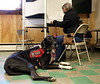 HOLLY PELCZYNSKI - BENNINGTON BANNER Lydia, a Great Dane service dog waits for her owner, Annette Griffith of Pownal while she votes at the Pownal Fire Department on Tuesday morning.