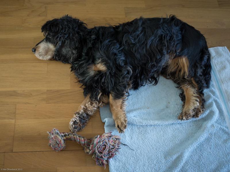 Freddes sista dag, och den sista bilden av honom.  Trött och sjuk, men troligen utan smärtor.