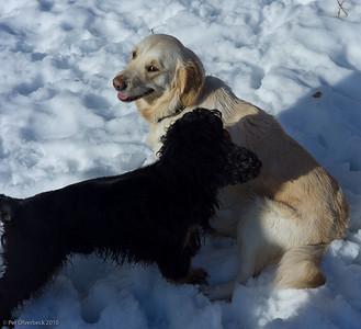 Hundar kan taala....