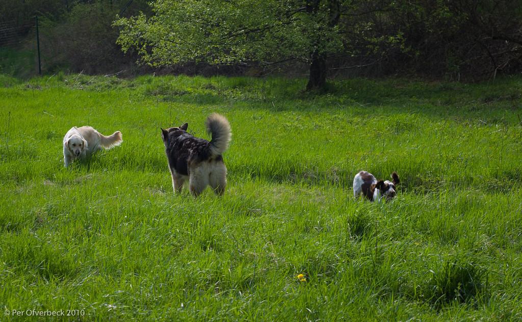 Isa, Sally schäfer, Bella