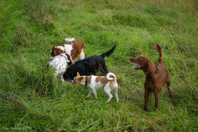 Pembroke, Bella, Doris, Trixie