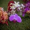 big island hawaii mauna lani resort eva parker woods cottage wedding vow renewal 20161014170600-1