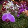 big island hawaii mauna lani resort eva parker woods cottage wedding vow renewal 20161014170549-1