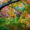 Couleurs d'automne sur les bords du lac de Côme