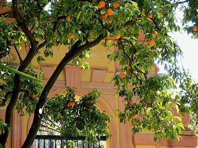 Orangers dans les jardins de l'Alcazar