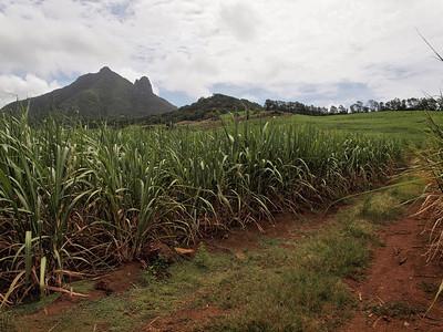 Côté terre : les champs de canne à sucre