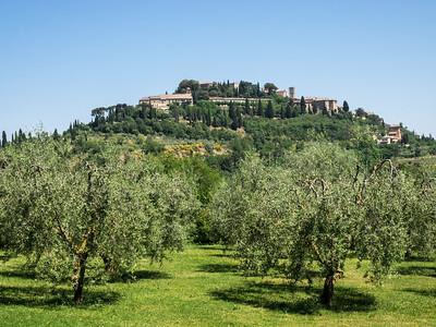 Les oliviers au pied de la colline
