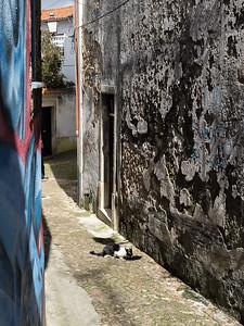 Le festin du chat dans la ruelle