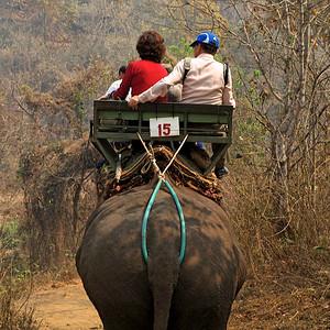Un éléphant, ça... tangue énormément !