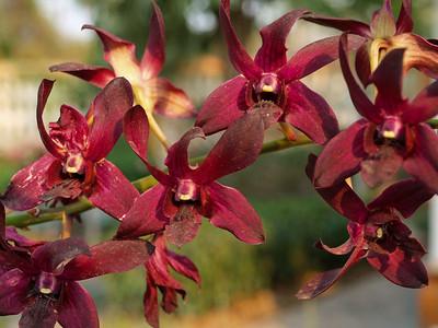 Oui, il y a des orchidées...