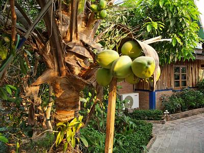 Des noix de coco ?