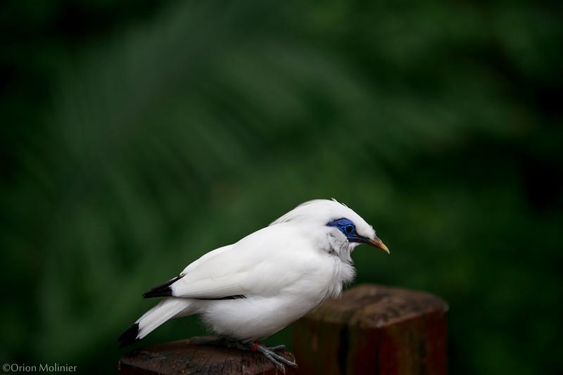 Oiseau du Hong Kong Park