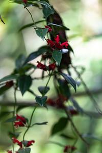 Fleur de jungle