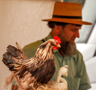 Might as well continue with the animal kingdom. Amish raised chickens.