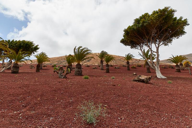 20180510 Fuerteventura img023