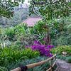 Plantation de Munduk - Munduk - Bali - Indonésie