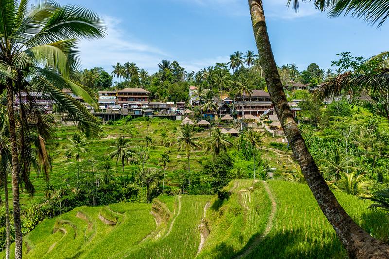 Ubud et les environs - Bali - Indonésie