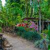 Trek à Munduk - Bali - Indonésie