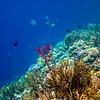 Île de Menjangan - Bali - Indonésie