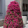 Ce genre de massif de fleurs en pot est assez commun en Europe