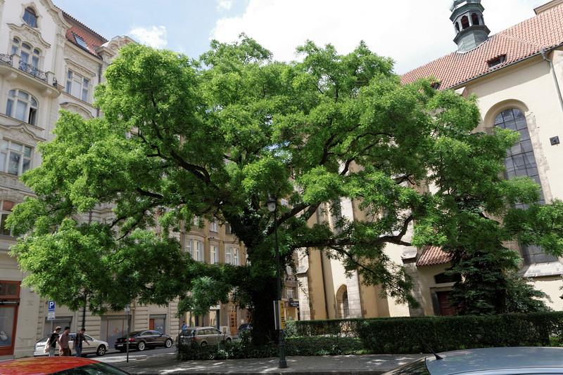 Spécialement pour Mariette je pose un arbre