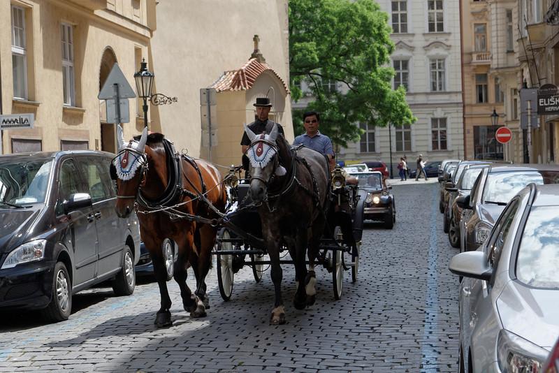 Les chevaux aussi sont parés de leur plus beaux atouts.