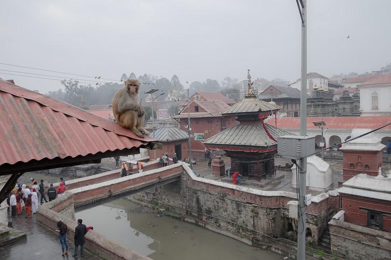 Sanctuaire hindou de Pashupatinath. Katmandou, février 2019