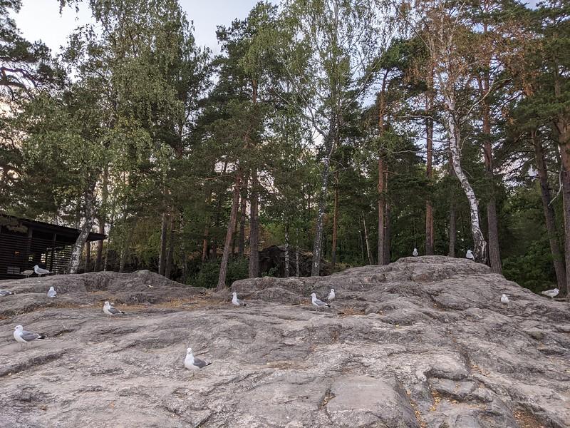 Presqu'île de Ruissalo (Turku, Finlande)