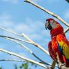 Le Parc aux Oiseaux - Bali