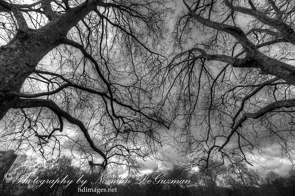 Trees along Consitiution Hill