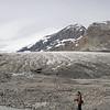 Le front du glacier Athabaska et sa moraine d'ablation