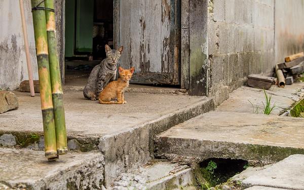Borneo, Malaisie