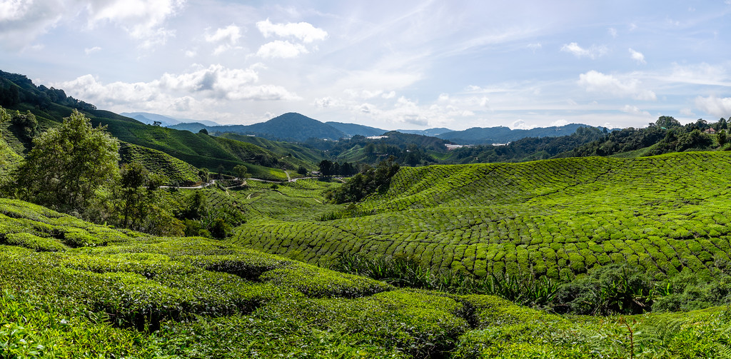 Cameron Highlands - Malaisie