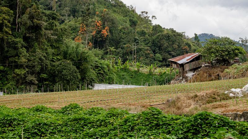 Tanah Rata - Malaisie