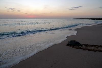 Bref, on se demande si la nature fait bien les choses et si la tortue doit avoir la tête dans l'eau AVANT les premiers rayons du soleil...