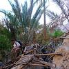 Le Wadi Tiwi... Tout un poème pour les approches... Depuis le village de Miban, évitez absolument la palmeraie, truffée de puces et vraiment paumatoire...