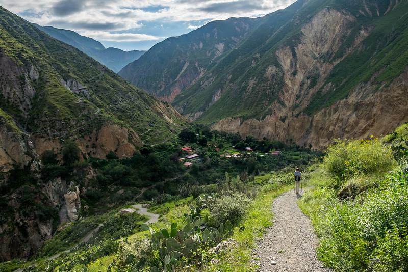 Oasis de Sangalle, Canyon del Colca, Pérou