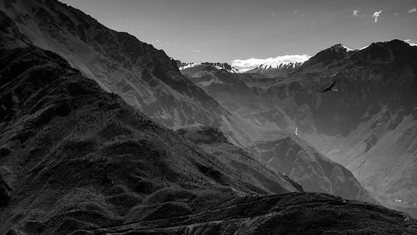 Condor au canyon del Colca, Pérou