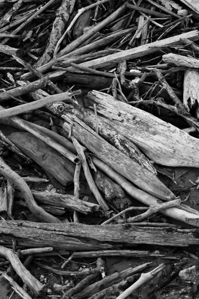 Parc régional de la Maremme. Morceaux de bois.