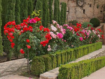 Granada - Generalife - Jardins Nouveaux