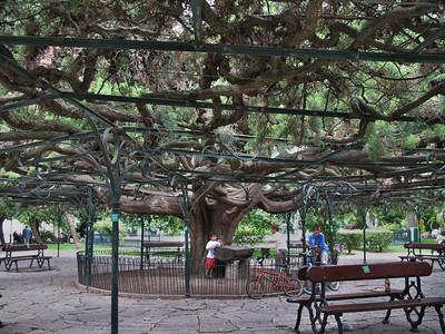 Jardim do Principe real - Quartier Bairro Alto