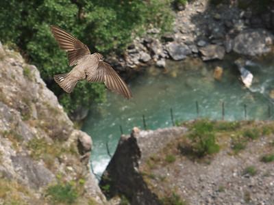 Briançon - Gorges de la Durance, près du Pont d'Asfeld